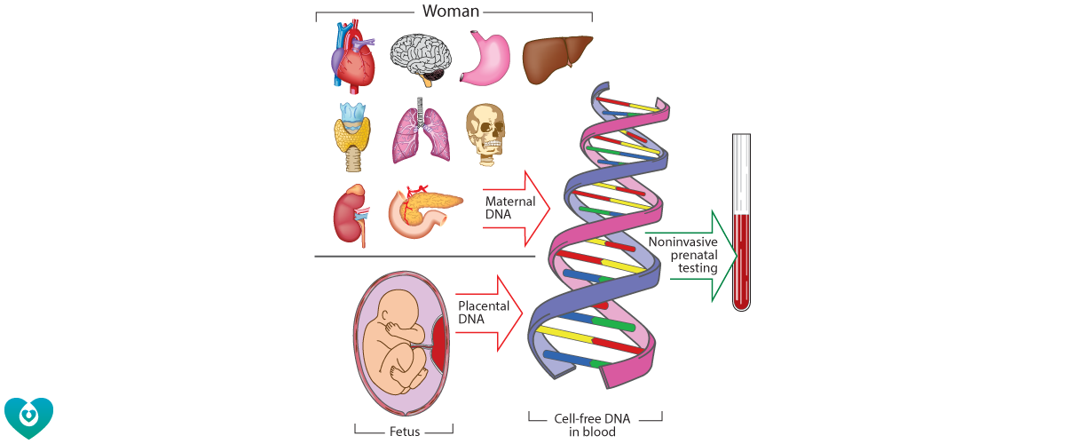 Fig11_with_DNA_strand.png#asset:1516